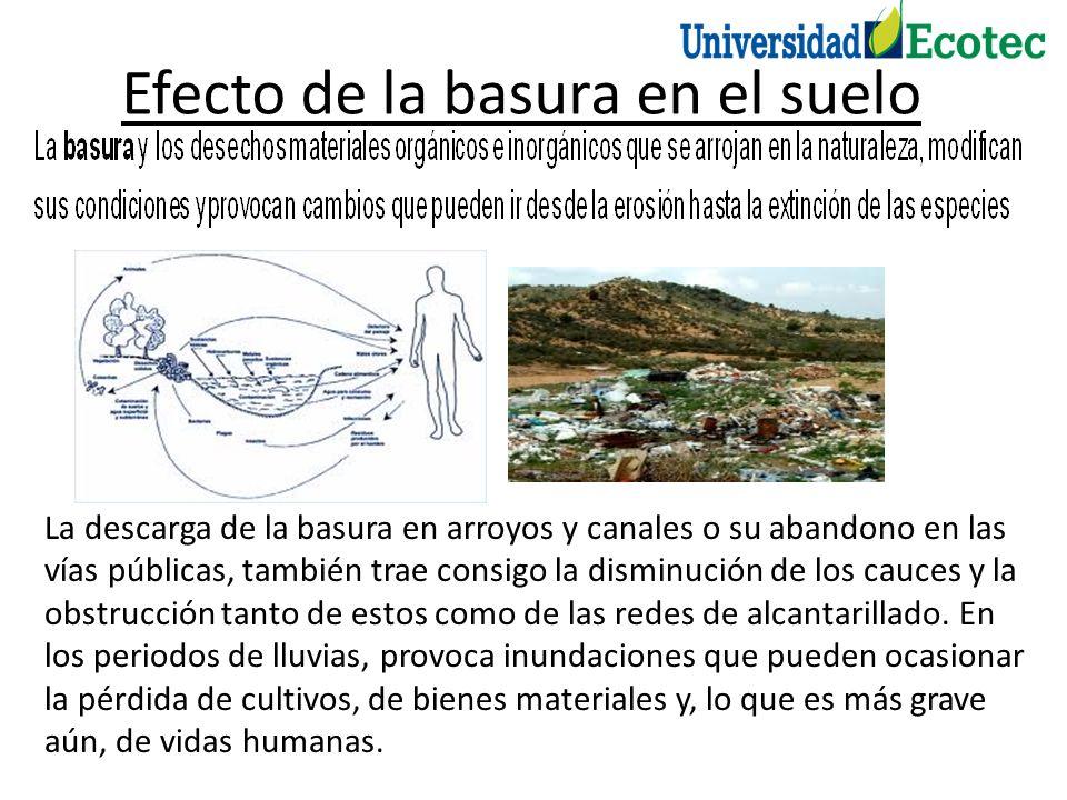 Efecto de la basura en el suelo