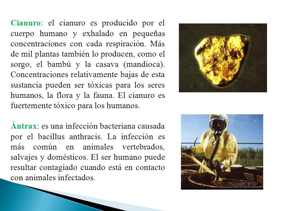 Cianuro: el cianuro es producido por el cuerpo humano y exhalado en pequeñas concentraciones con cada respiración. Más de mil plantas también lo producen, como el sorgo, el bambú y la casava (mandioca). Concentraciones relativamente bajas de esta sustancia pueden ser tóxicas para los seres humanos, la flora y la fauna. El cianuro es fuertemente tóxico para los humanos.