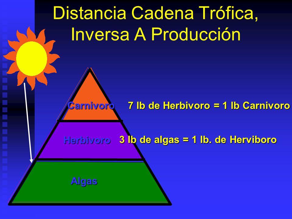 Distancia Cadena Trófica, Inversa A Producción