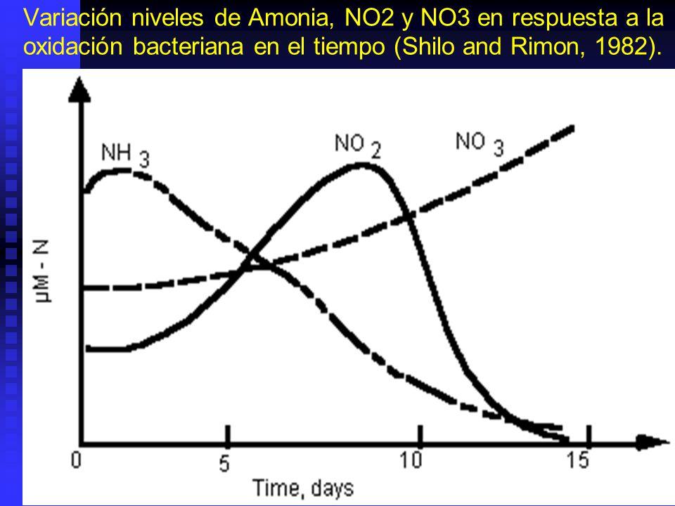 Variación niveles de Amonia, NO2 y NO3 en respuesta a la oxidación bacteriana en el tiempo (Shilo and Rimon, 1982).