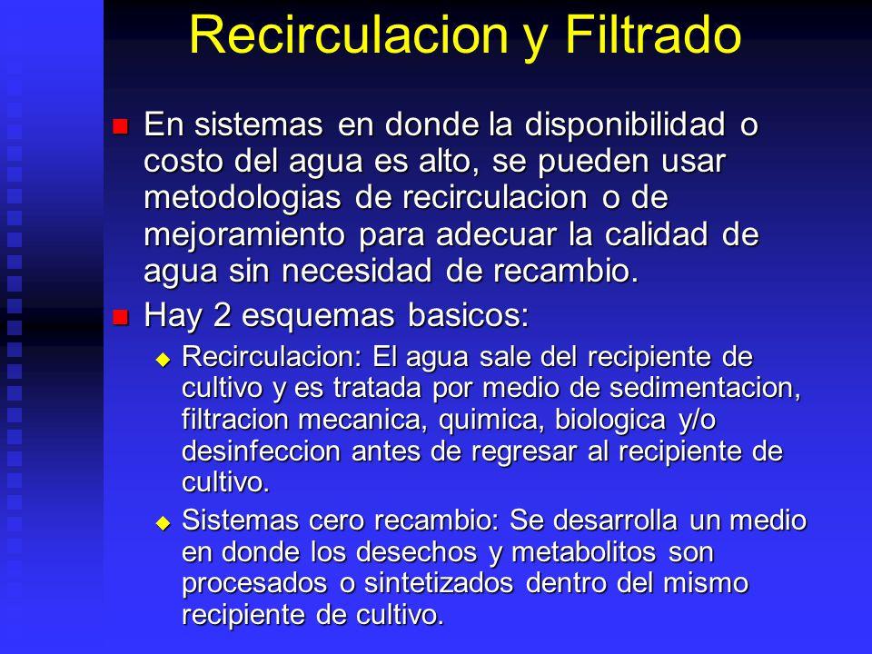 Recirculacion y Filtrado