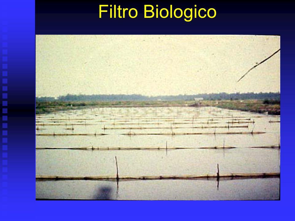 Filtro Biologico