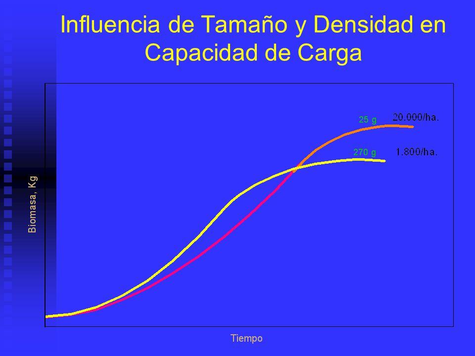 Influencia de Tamaño y Densidad en Capacidad de Carga