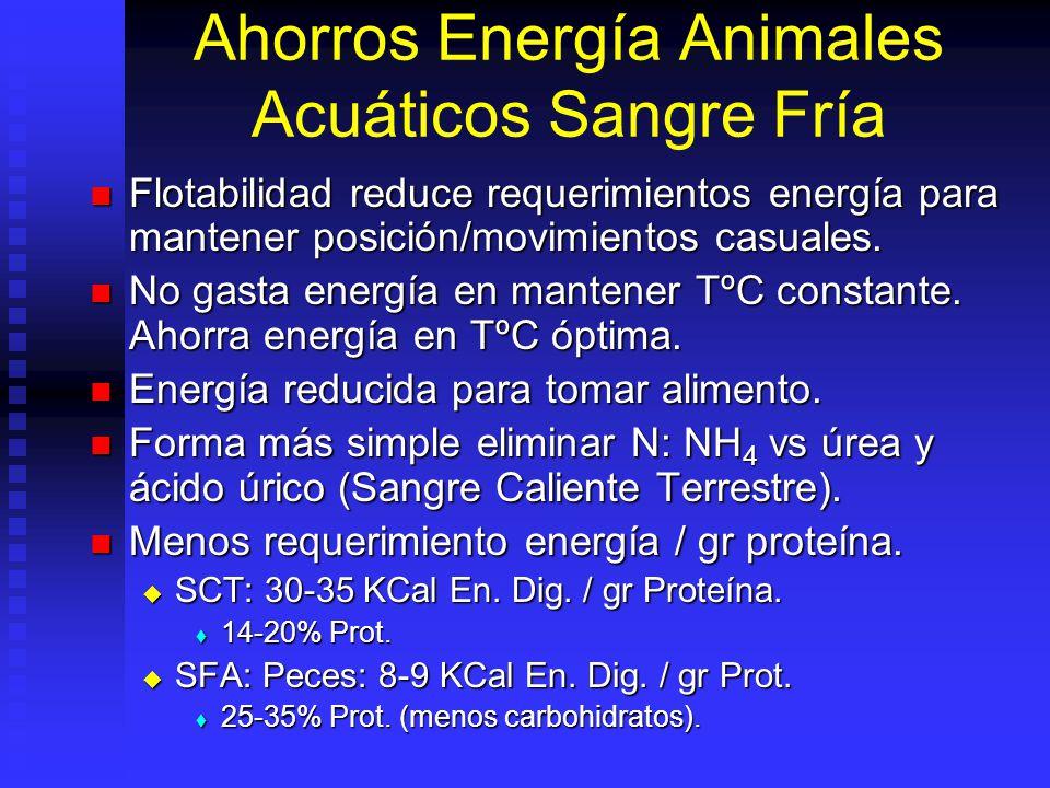 Ahorros Energía Animales Acuáticos Sangre Fría