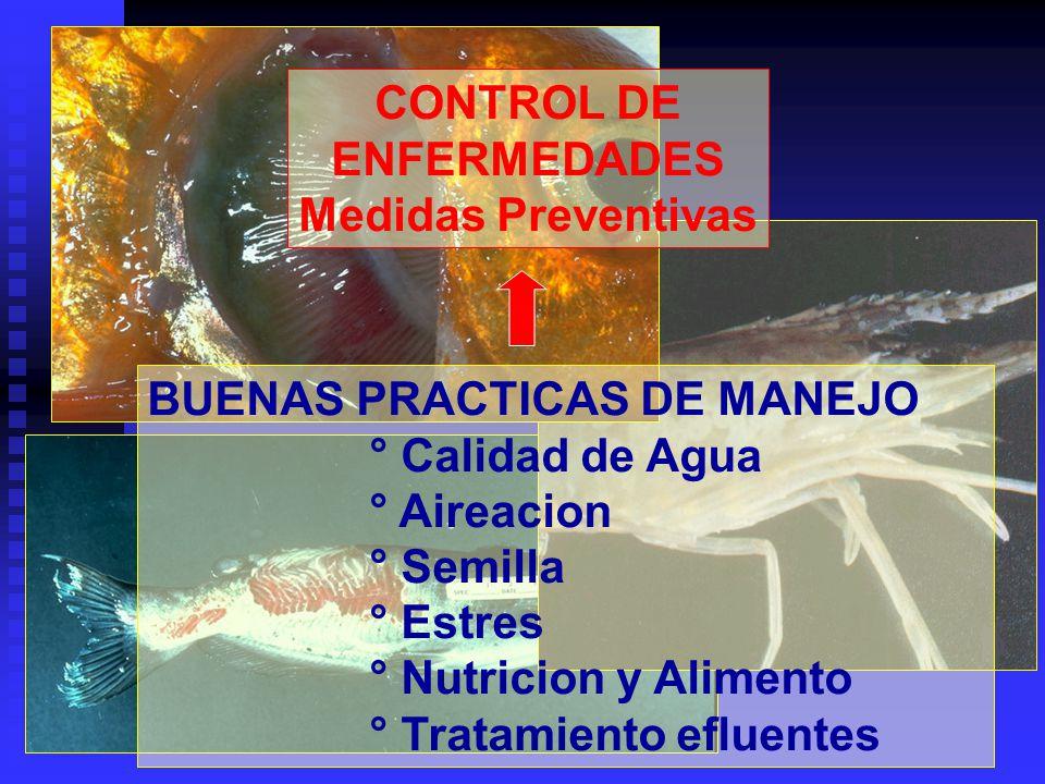 CONTROL DE ENFERMEDADES Medidas Preventivas