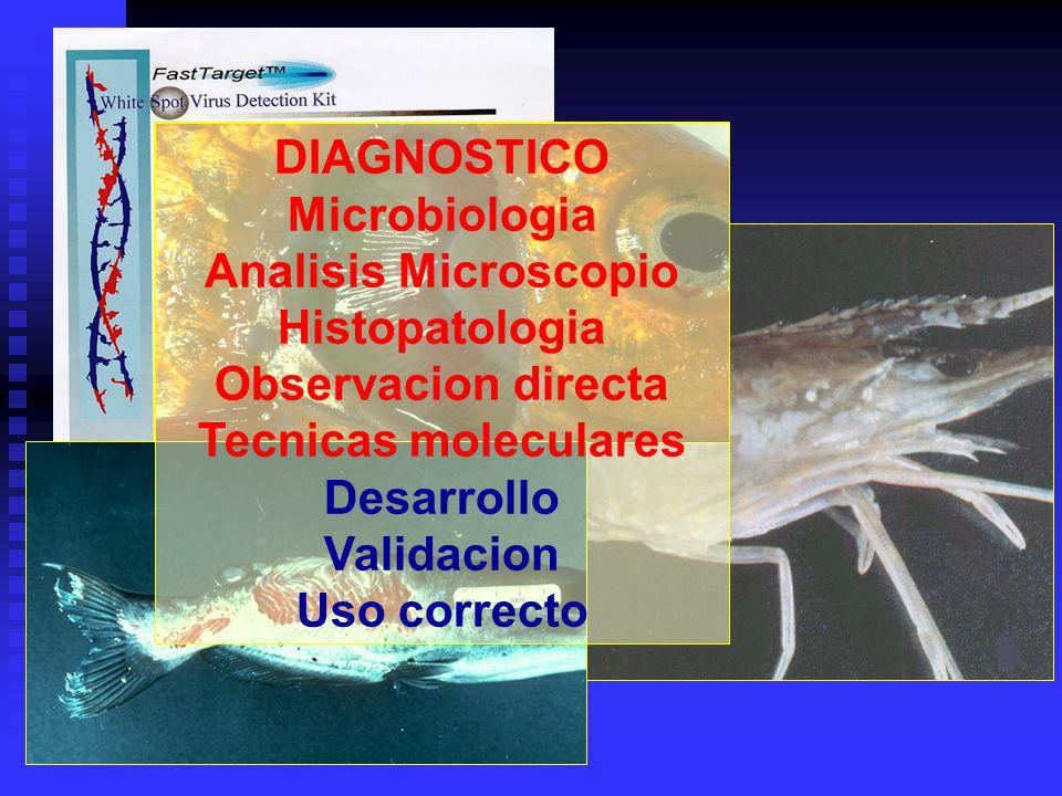 DIAGNOSTICO Microbiologia Analisis Microscopio Histopatologia