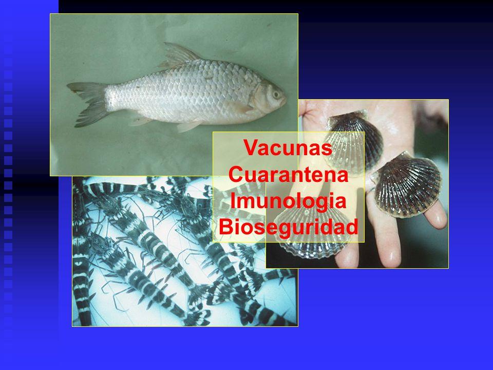 Vacunas Cuarantena Imunologia Bioseguridad
