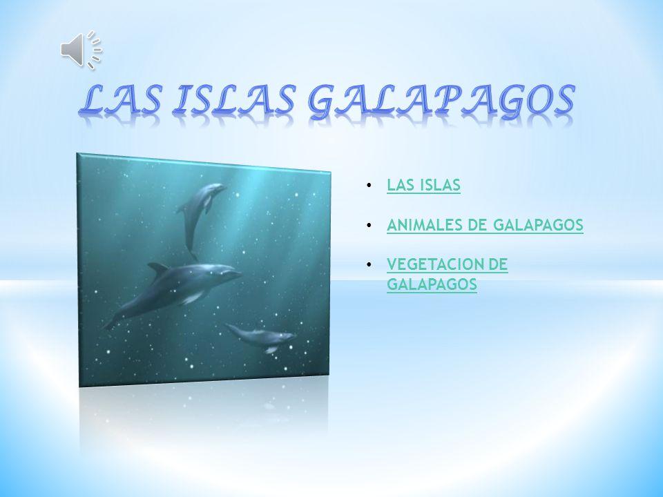LAS ISLAS GALAPAGOS LAS ISLAS ANIMALES DE GALAPAGOS