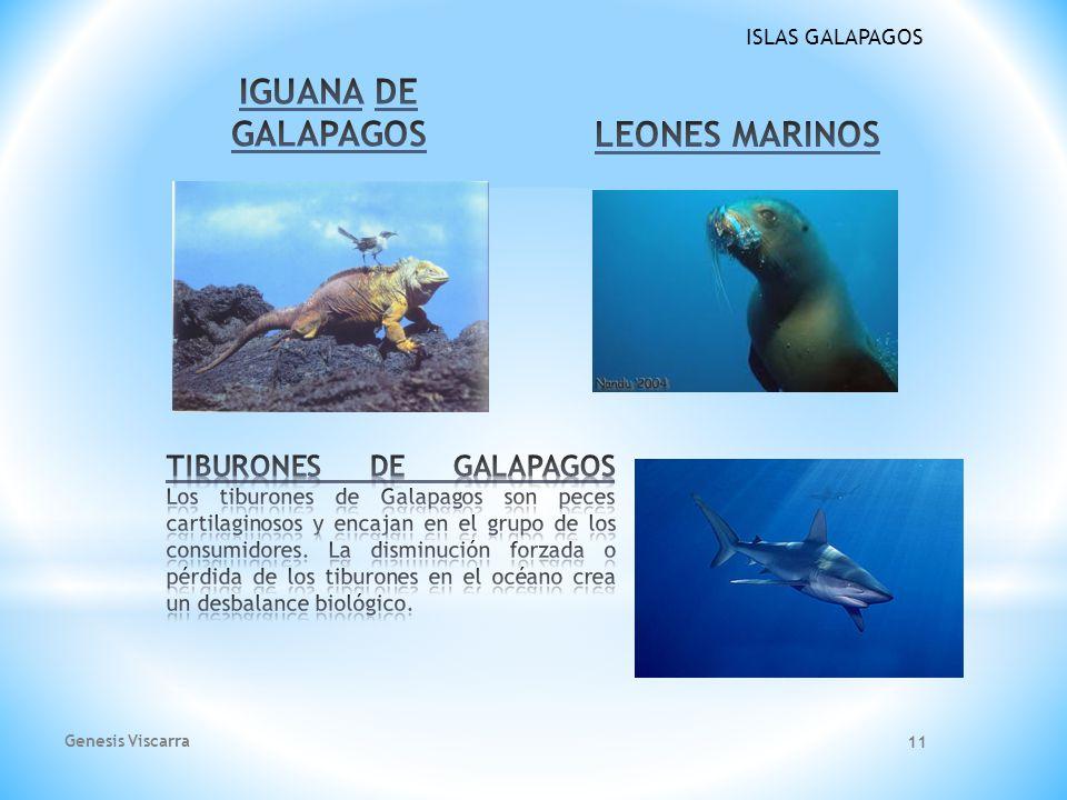IGUANA DE GALAPAGOS LEONES MARINOS