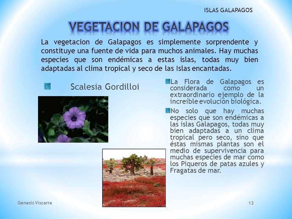 VEGETACION DE GALAPAGOS