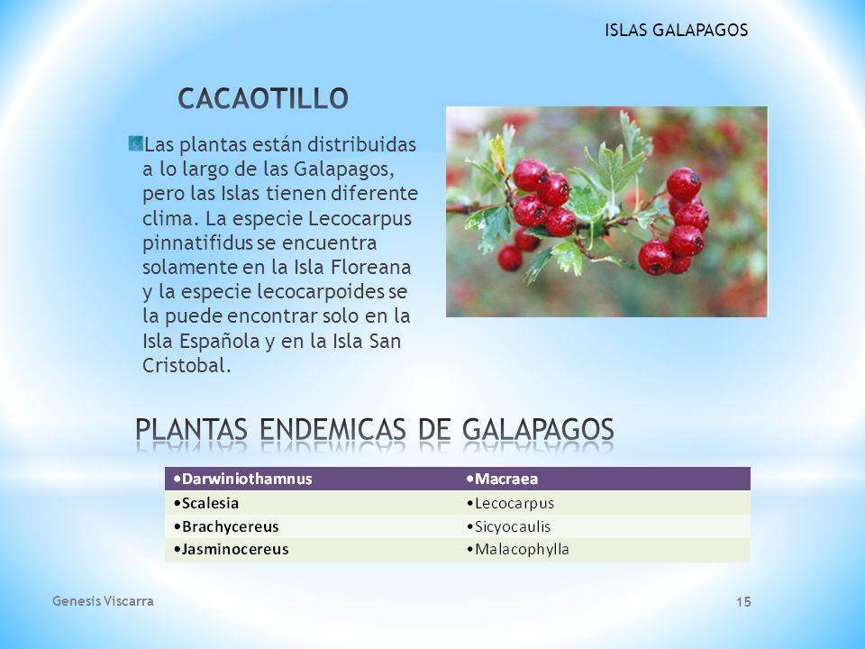 PLANTAS ENDEMICAS DE GALAPAGOS