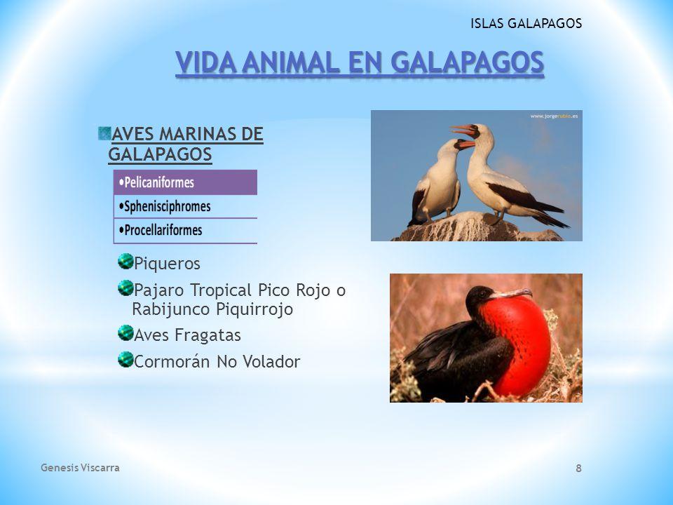VIDA ANIMAL EN GALAPAGOS