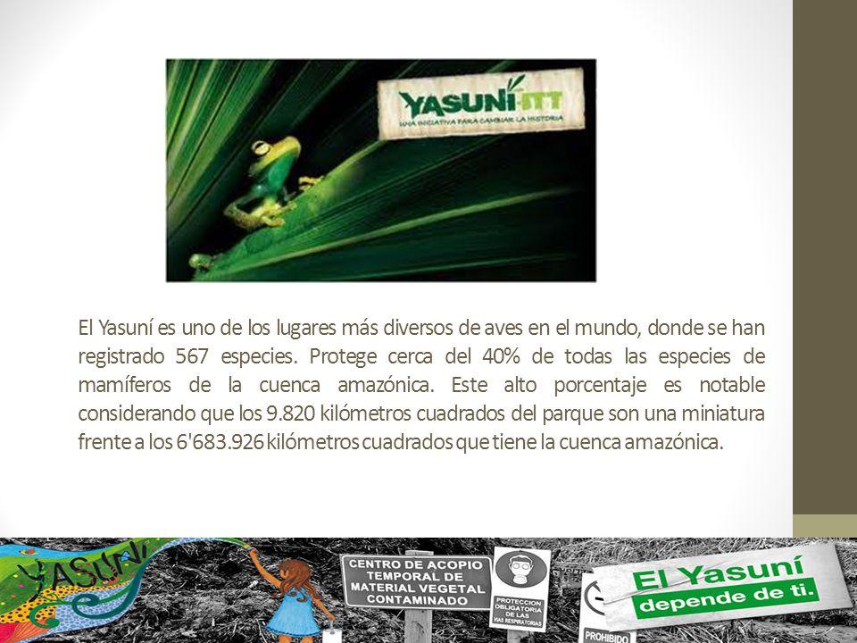 El Yasuní es uno de los lugares más diversos de aves en el mundo, donde se han registrado 567 especies.