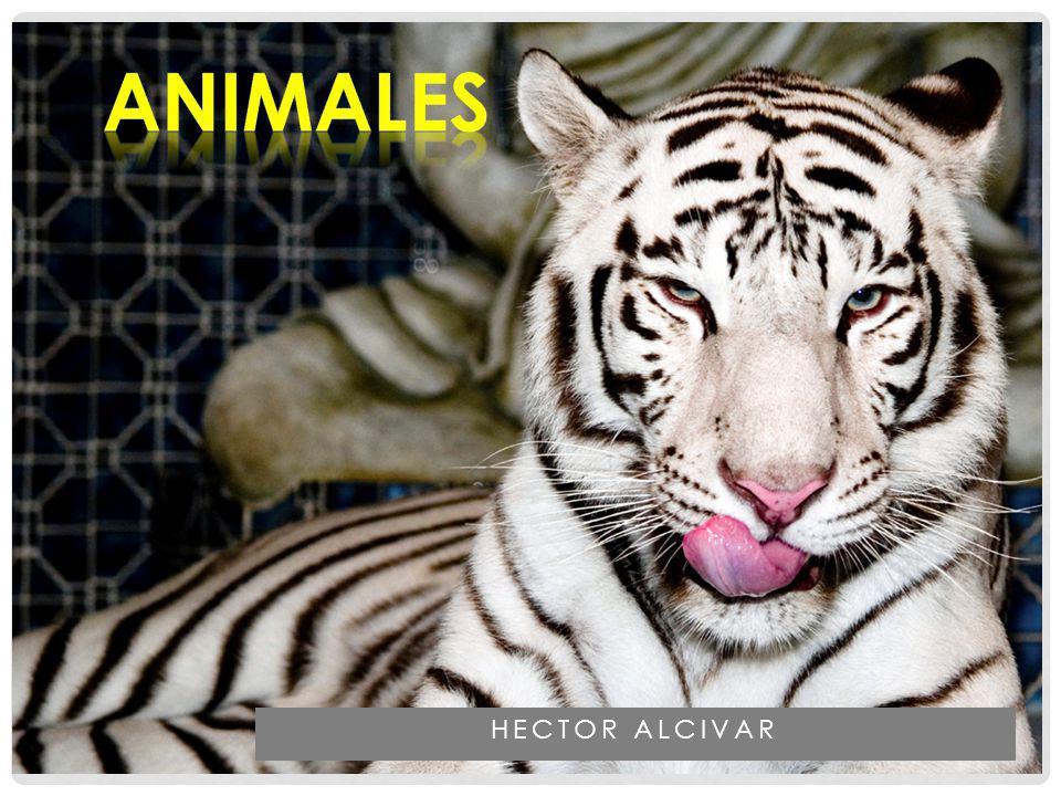 aNIMALES HECTOR ALCIVAR