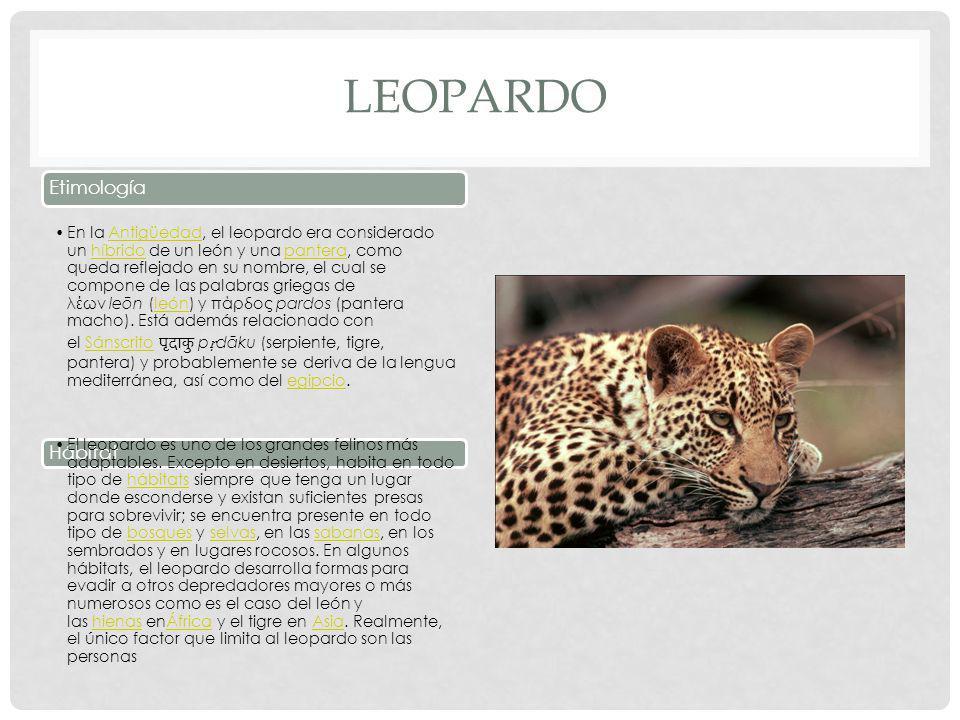 LEOPARDO Etimología Hábitat