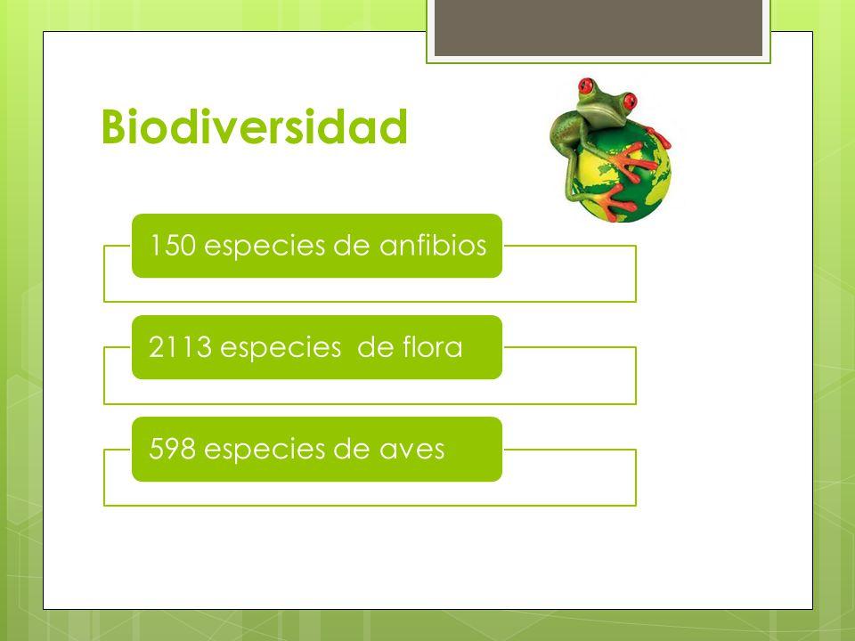 Biodiversidad 150 especies de anfibios 2113 especies de flora