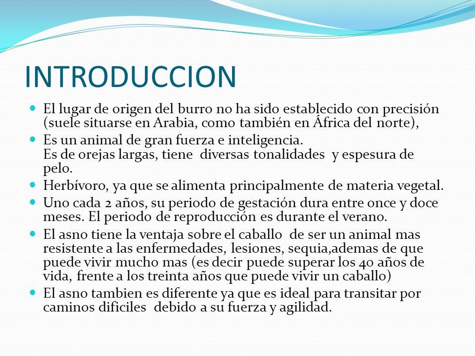 INTRODUCCION El lugar de origen del burro no ha sido establecido con precisión (suele situarse en Arabia, como también en África del norte),