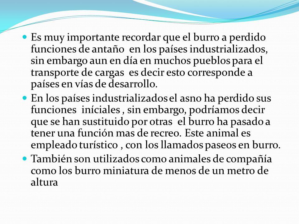 Es muy importante recordar que el burro a perdido funciones de antaño en los países industrializados, sin embargo aun en día en muchos pueblos para el transporte de cargas es decir esto corresponde a países en vías de desarrollo.