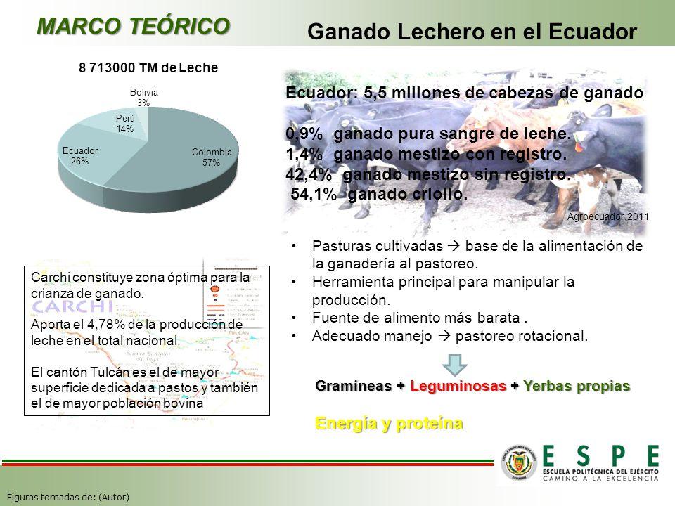 Ganado Lechero en el Ecuador