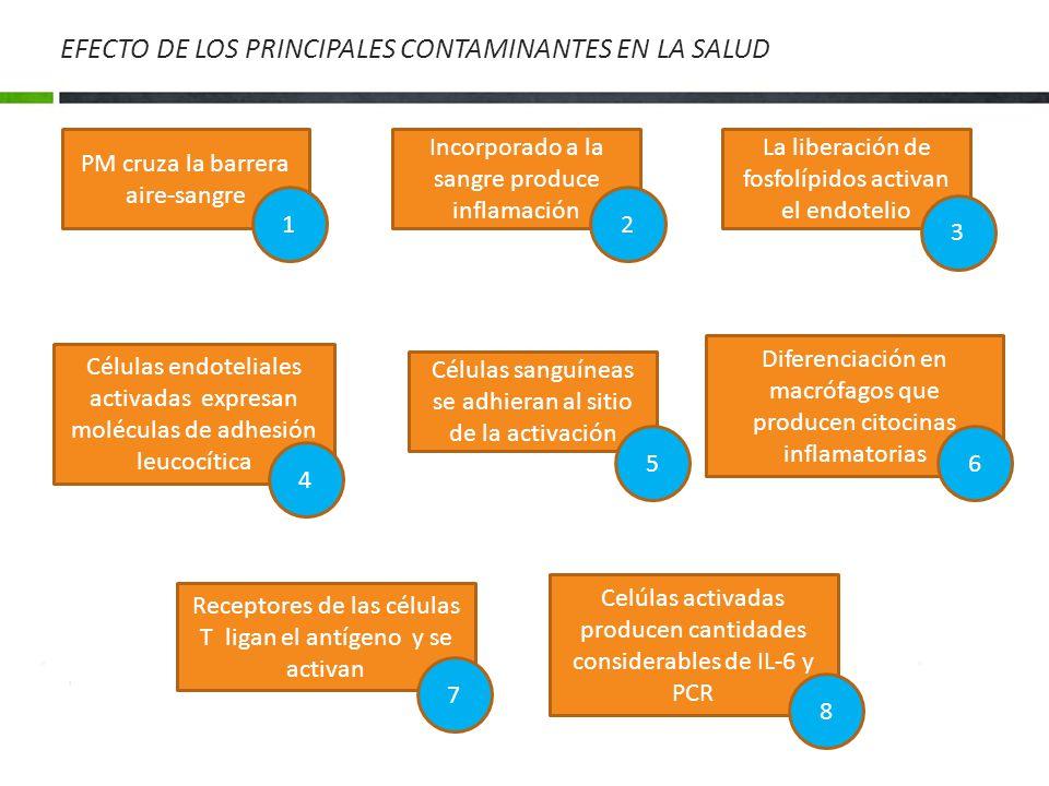 EFECTO DE LOS PRINCIPALES CONTAMINANTES EN LA SALUD