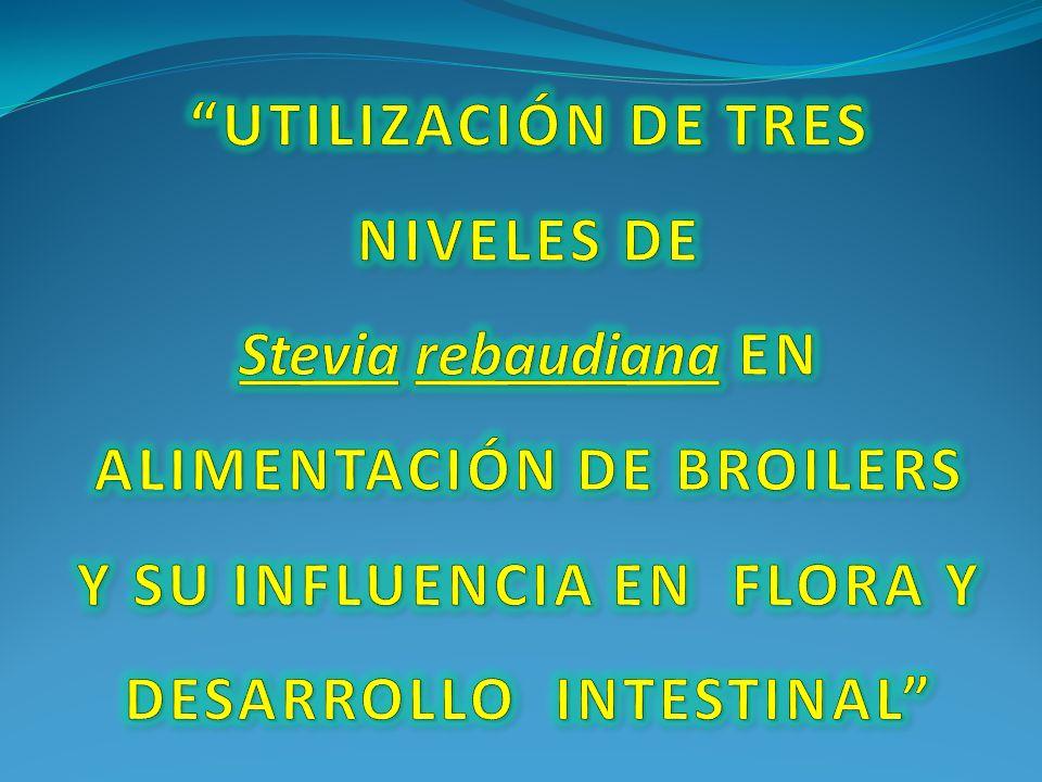 UTILIZACIÓN DE TRES NIVELES DE Stevia rebaudiana EN ALIMENTACIÓN DE BROILERS Y SU INFLUENCIA EN FLORA Y DESARROLLO INTESTINAL