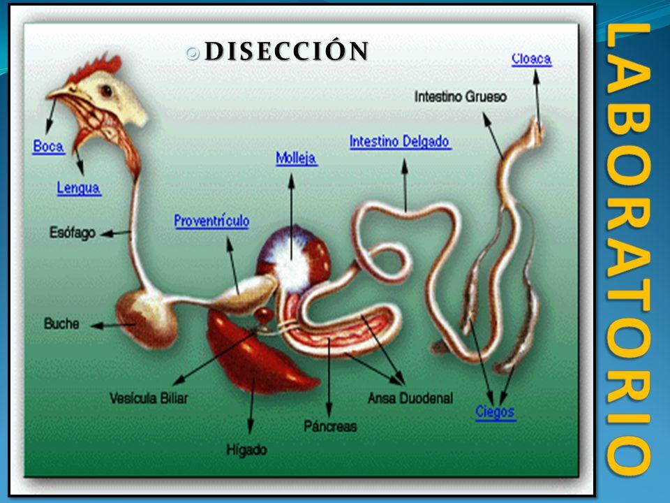 laboratorio DISECCIÓN