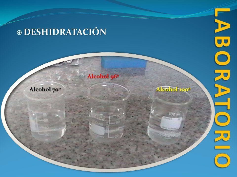 laboratorio DESHIDRATACIÓN Alcohol 96º Alcohol 70º Alcohol 100º