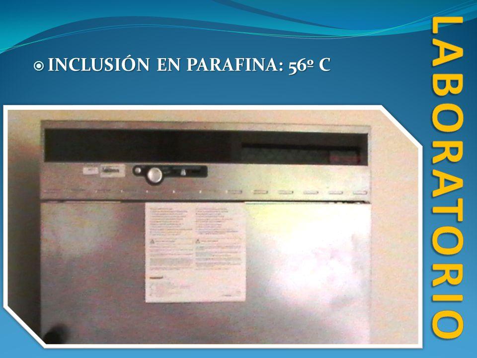 laboratorio INCLUSIÓN EN PARAFINA: 56º C