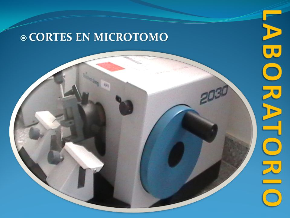 laboratorio CORTES EN MICROTOMO