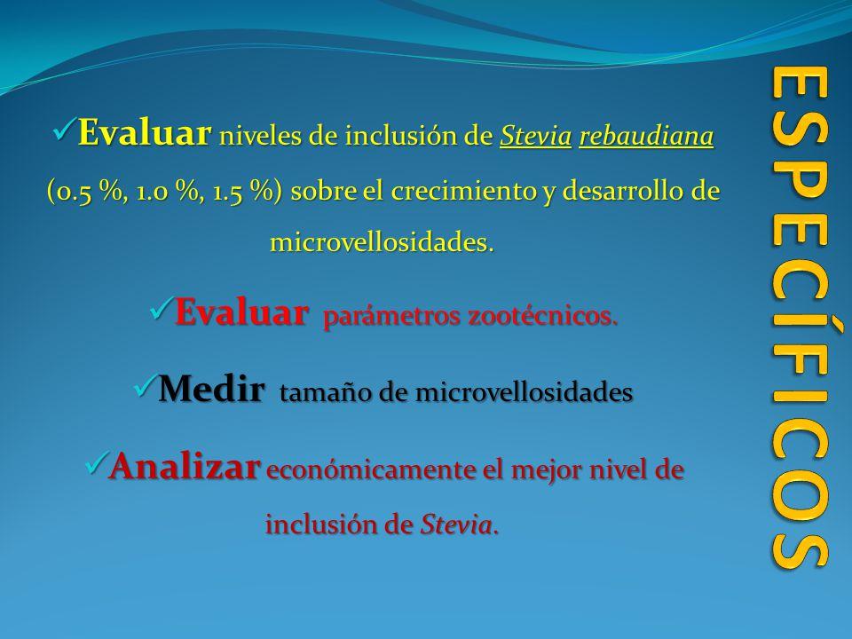 ESPECÍFICOS Evaluar niveles de inclusión de Stevia rebaudiana (0.5 %, 1.0 %, 1.5 %) sobre el crecimiento y desarrollo de microvellosidades.