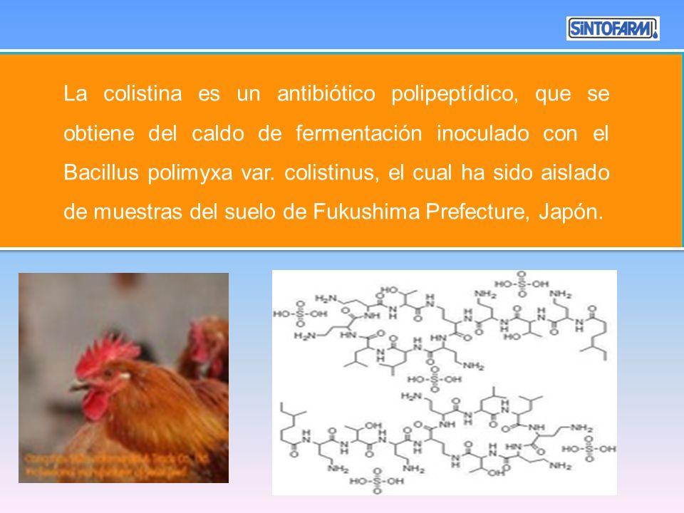 La colistina es un antibiótico polipeptídico, que se obtiene del caldo de fermentación inoculado con el Bacillus polimyxa var. colistinus, el cual ha sido aislado de muestras del suelo de Fukushima Prefecture, Japón.