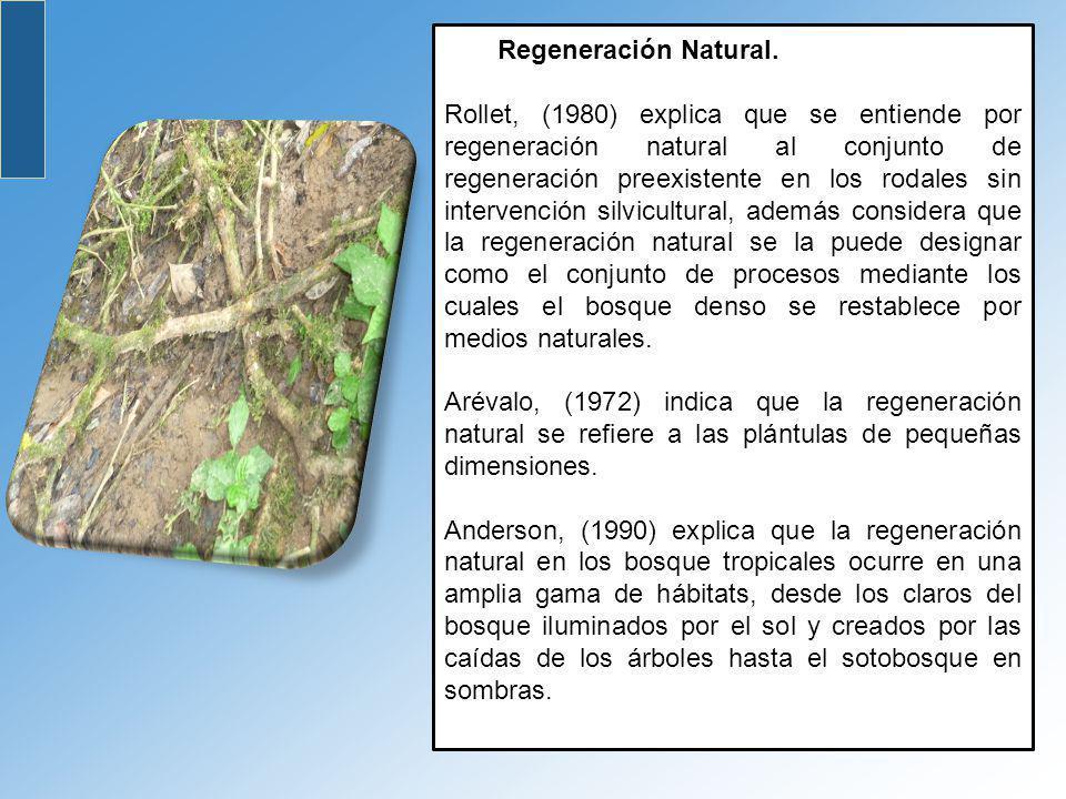 Regeneración Natural.