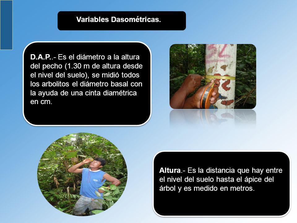 Variables Dasométricas.