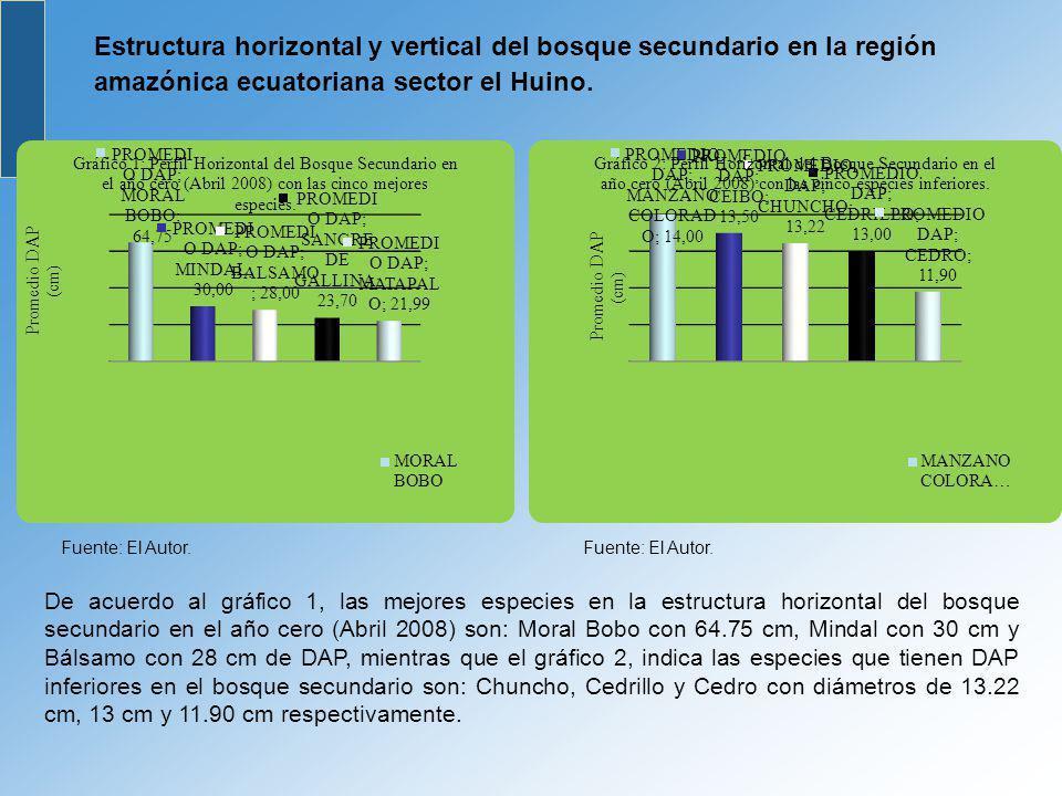 Estructura horizontal y vertical del bosque secundario en la región amazónica ecuatoriana sector el Huino.