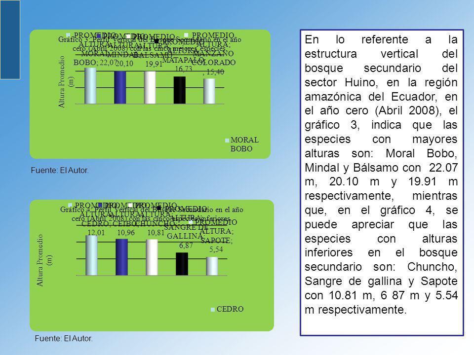 En lo referente a la estructura vertical del bosque secundario del sector Huino, en la región amazónica del Ecuador, en el año cero (Abril 2008), el gráfico 3, indica que las especies con mayores alturas son: Moral Bobo, Mindal y Bálsamo con 22.07 m, 20.10 m y 19.91 m respectivamente, mientras que, en el gráfico 4, se puede apreciar que las especies con alturas inferiores en el bosque secundario son: Chuncho, Sangre de gallina y Sapote con 10.81 m, 6 87 m y 5.54 m respectivamente.