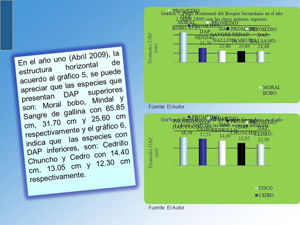 En el año uno (Abril 2009), la estructura horizontal de acuerdo al gráfico 5, se puede apreciar que las especies que presentan DAP superiores son: Moral bobo, Mindal y Sangre de gallina con 65.85 cm, 31.70 cm y 25.60 cm respectivamente y el gráfico 6, indica que las especies con DAP inferiores, son: Cedrillo Chuncho y Cedro con 14.40 cm, 13.05 cm y 12.30 cm respectivamente.