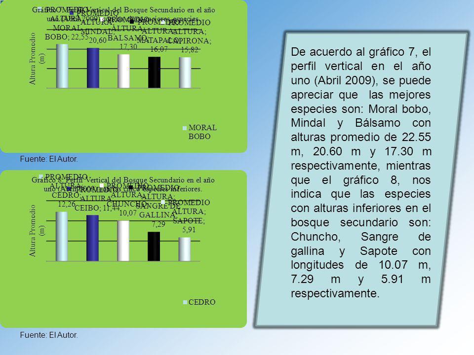 De acuerdo al gráfico 7, el perfil vertical en el año uno (Abril 2009), se puede apreciar que las mejores especies son: Moral bobo, Mindal y Bálsamo con alturas promedio de 22.55 m, 20.60 m y 17.30 m respectivamente, mientras que el gráfico 8, nos indica que las especies con alturas inferiores en el bosque secundario son: Chuncho, Sangre de gallina y Sapote con longitudes de 10.07 m, 7.29 m y 5.91 m respectivamente.