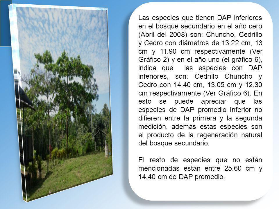 Las especies que tienen DAP inferiores en el bosque secundario en el año cero (Abril del 2008) son: Chuncho, Cedrillo y Cedro con diámetros de 13.22 cm, 13 cm y 11.90 cm respectivamente (Ver Gráfico 2) y en el año uno (el gráfico 6), indica que las especies con DAP inferiores, son: Cedrillo Chuncho y Cedro con 14.40 cm, 13.05 cm y 12.30 cm respectivamente (Ver Gráfico 6). En esto se puede apreciar que las especies de DAP promedio inferior no difieren entre la primera y la segunda medición, además estas especies son el producto de la regeneración natural del bosque secundario.