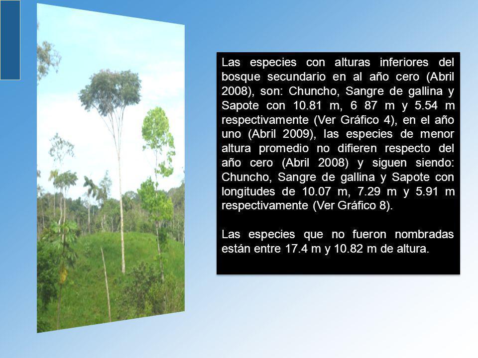 Las especies con alturas inferiores del bosque secundario en al año cero (Abril 2008), son: Chuncho, Sangre de gallina y Sapote con 10.81 m, 6 87 m y 5.54 m respectivamente (Ver Gráfico 4), en el año uno (Abril 2009), las especies de menor altura promedio no difieren respecto del año cero (Abril 2008) y siguen siendo: Chuncho, Sangre de gallina y Sapote con longitudes de 10.07 m, 7.29 m y 5.91 m respectivamente (Ver Gráfico 8).