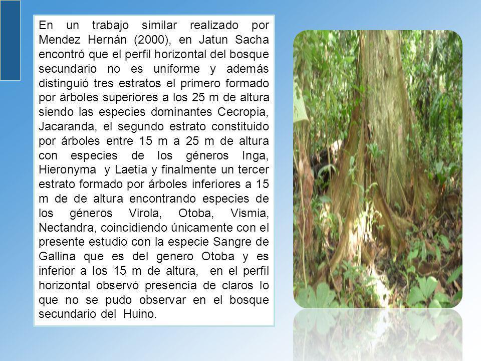 En un trabajo similar realizado por Mendez Hernán (2000), en Jatun Sacha encontró que el perfil horizontal del bosque secundario no es uniforme y además distinguió tres estratos el primero formado por árboles superiores a los 25 m de altura siendo las especies dominantes Cecropia, Jacaranda, el segundo estrato constituido por árboles entre 15 m a 25 m de altura con especies de los géneros Inga, Hieronyma y Laetia y finalmente un tercer estrato formado por árboles inferiores a 15 m de de altura encontrando especies de los géneros Virola, Otoba, Vismia, Nectandra, coincidiendo únicamente con el presente estudio con la especie Sangre de Gallina que es del genero Otoba y es inferior a los 15 m de altura, en el perfil horizontal observó presencia de claros lo que no se pudo observar en el bosque secundario del Huino.