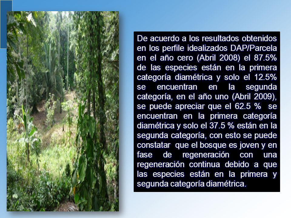 De acuerdo a los resultados obtenidos en los perfile idealizados DAP/Parcela en el año cero (Abril 2008) el 87.5% de las especies están en la primera categoría diamétrica y solo el 12.5% se encuentran en la segunda categoría, en el año uno (Abril 2009), se puede apreciar que el 62.5 % se encuentran en la primera categoría diamétrica y solo el 37.5 % están en la segunda categoría, con esto se puede constatar que el bosque es joven y en fase de regeneración con una regeneración continua debido a que las especies están en la primera y segunda categoría diamétrica.