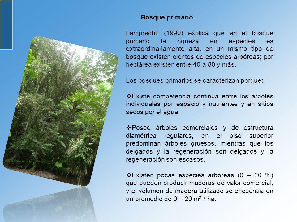 Bosque primario.