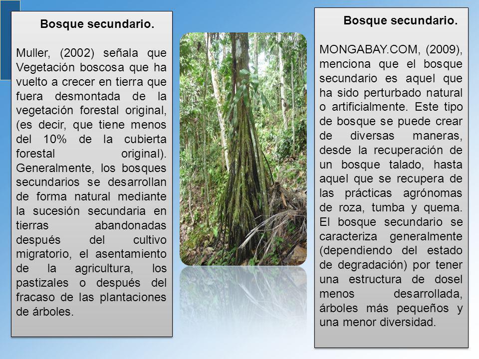 Bosque secundario.
