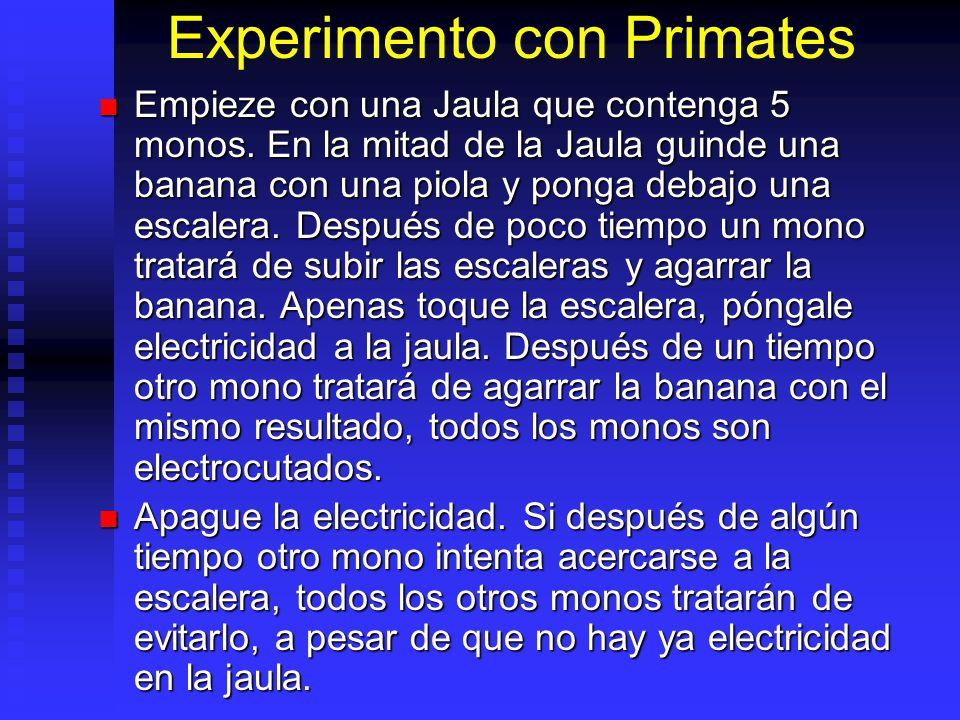 Experimento con Primates