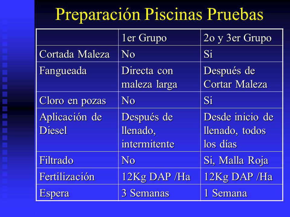 Preparación Piscinas Pruebas