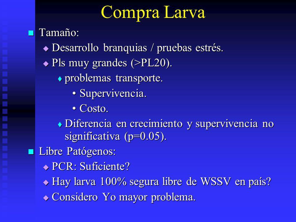 Compra Larva Tamaño: Desarrollo branquias / pruebas estrés.