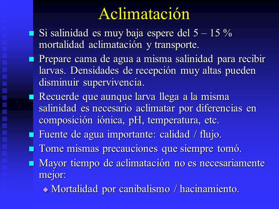 Aclimatación Si salinidad es muy baja espere del 5 – 15 % mortalidad aclimatación y transporte.