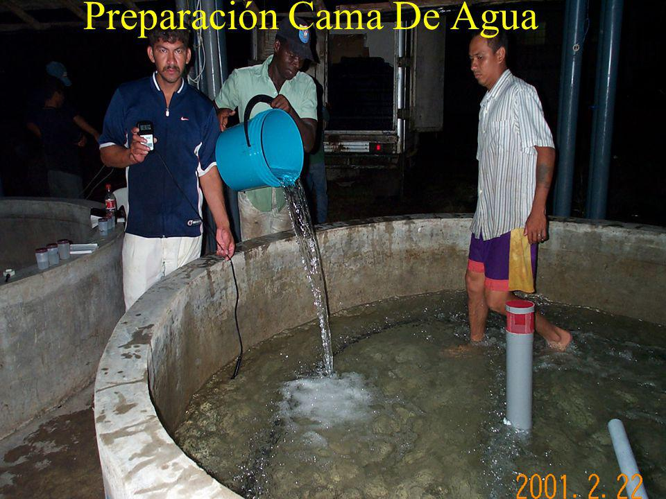 Preparación Cama De Agua