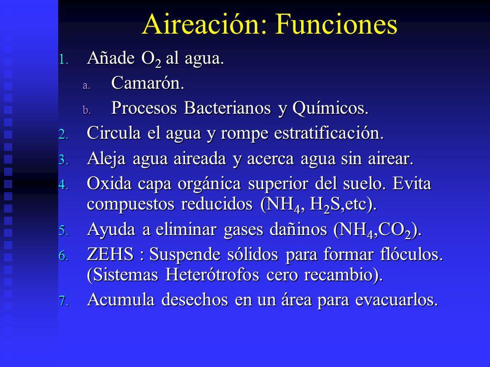 Aireación: Funciones Añade O2 al agua. Camarón.