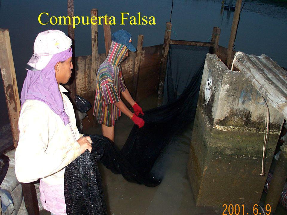 Compuerta Falsa